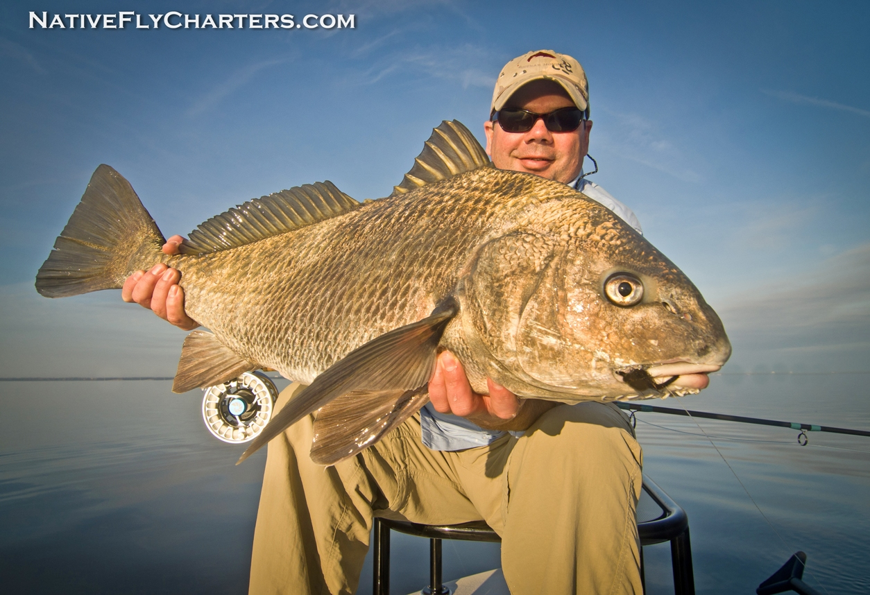 Banana River Black Drum