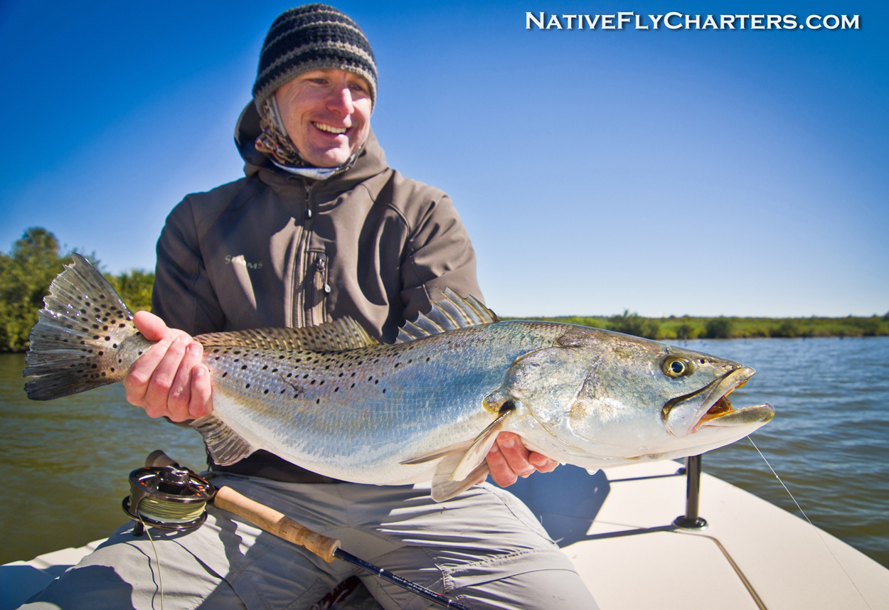 Big sea trout on fly